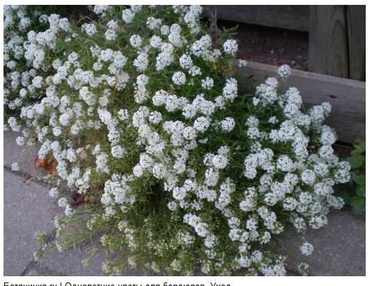 И цветов однолетних и многолетних