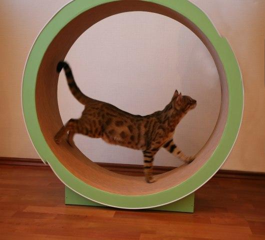 Беговое колесо для кошек сделать своими руками 52