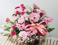 Доставка цветов снг васильки купить в москве цветы